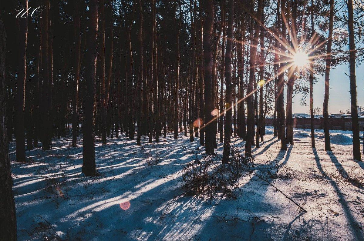лес - Оксана Ушанкова