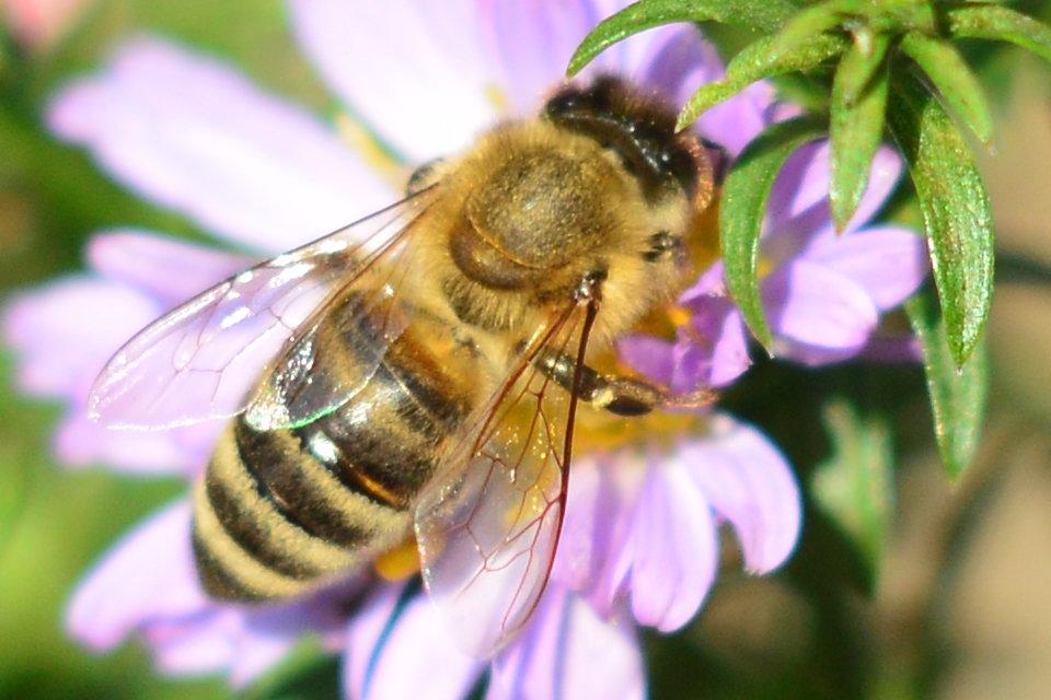 пчела - Михаил Bobikov