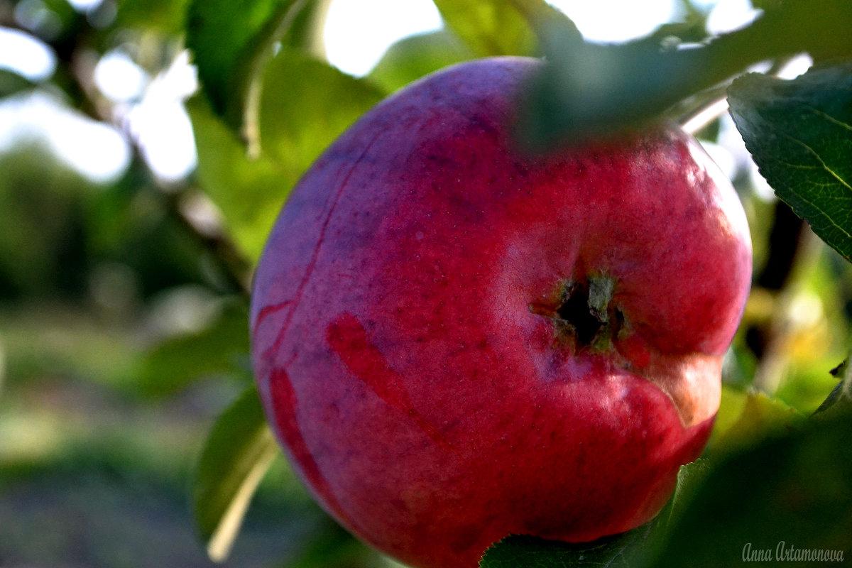 apple - Анна Артамонова