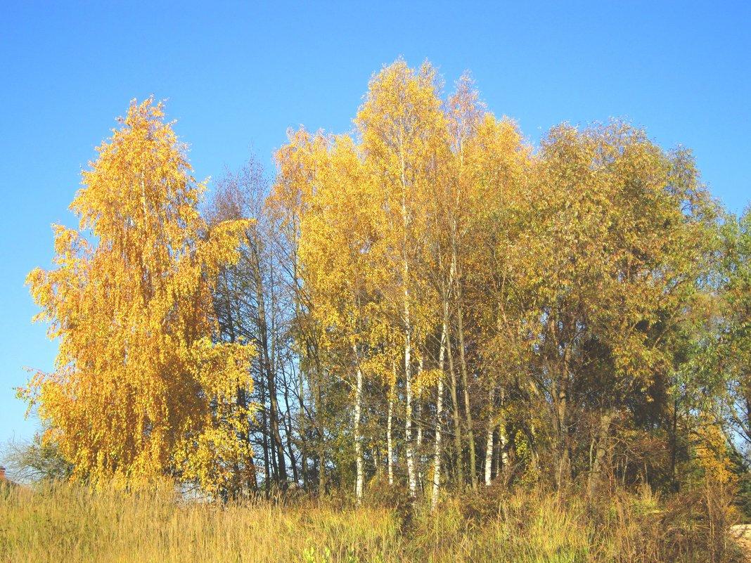 Золото осени - Андрей Снегерёв