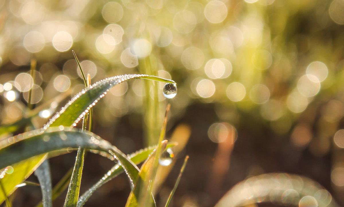 ловить на крючок маленькие радости и подолгу с восторгом разглядывать их