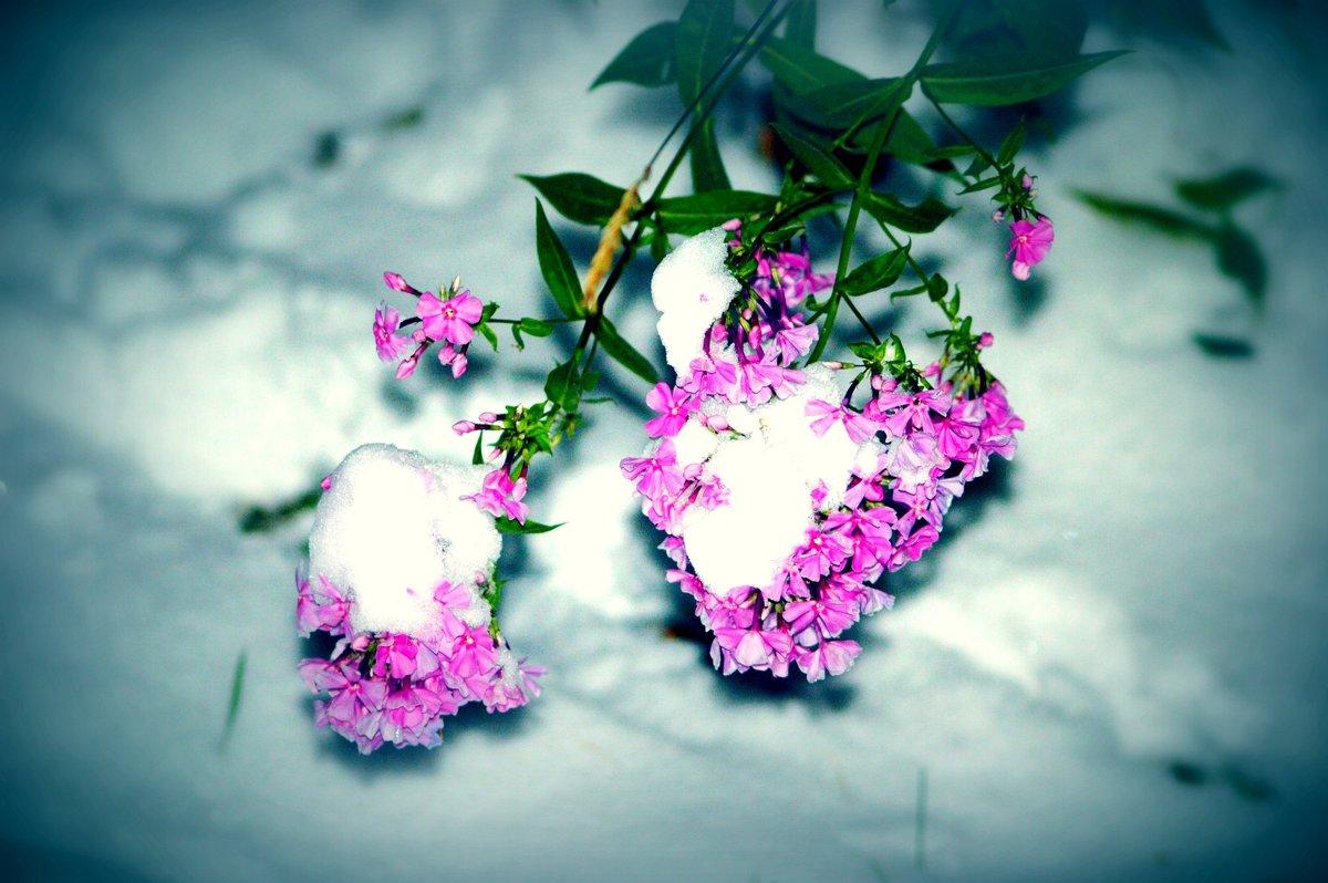 Осенние цветы - Натали V