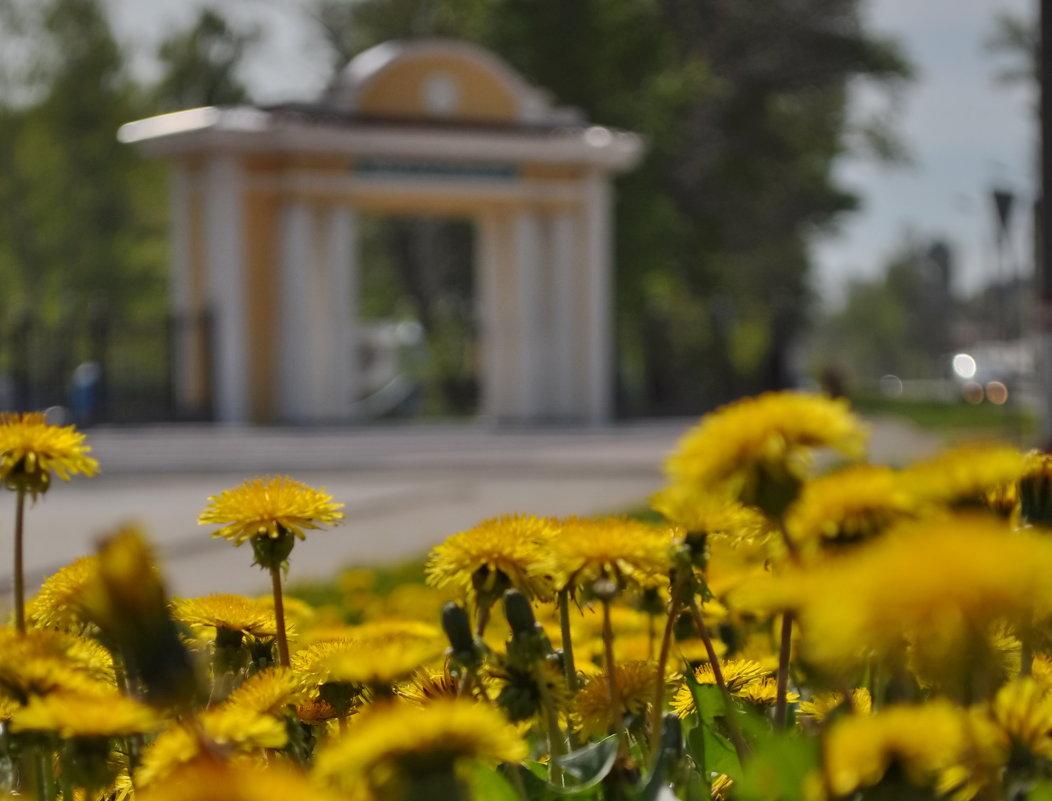 Старый парк... - Лариса Ошкина