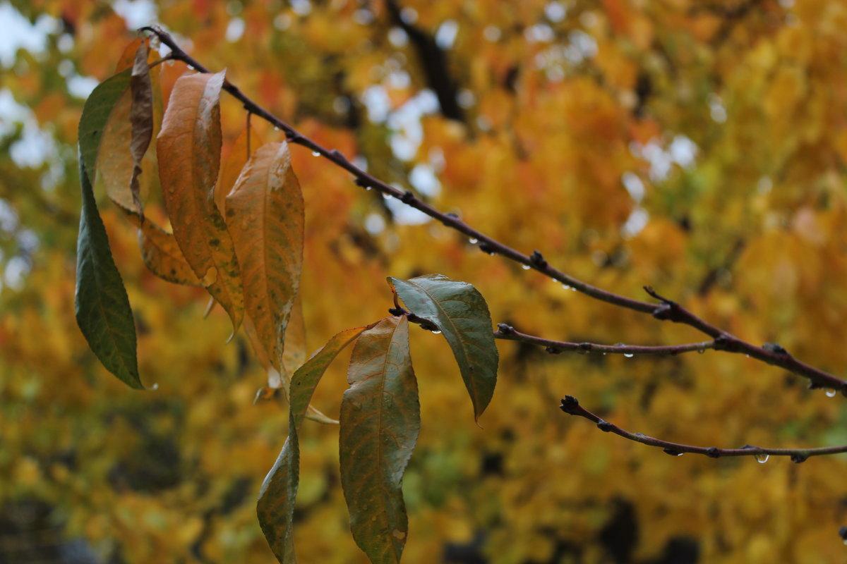 Осень - Людмила Тарасова