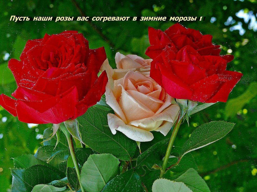 Открытка Букет роз для Тебя! - Цветы подруга Pinterest Floral 79