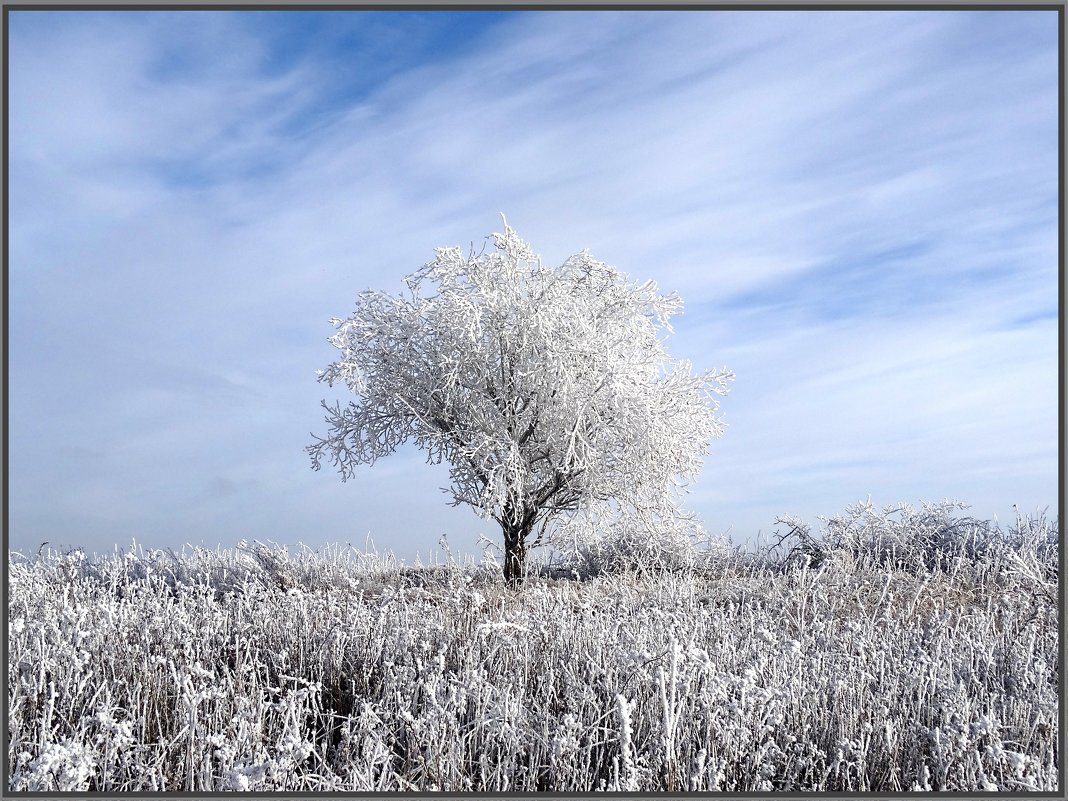 Здравствуй, гостья-зима!!!!!! - Ирина Голубева