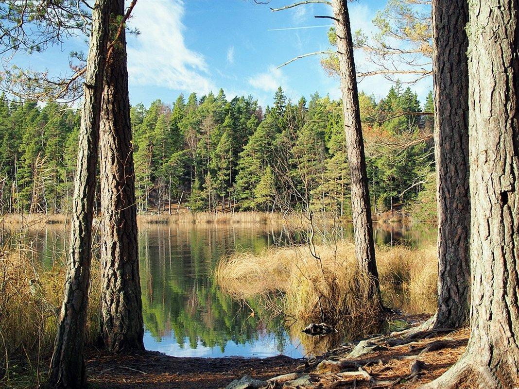 Природа Швеции - Swetlana V