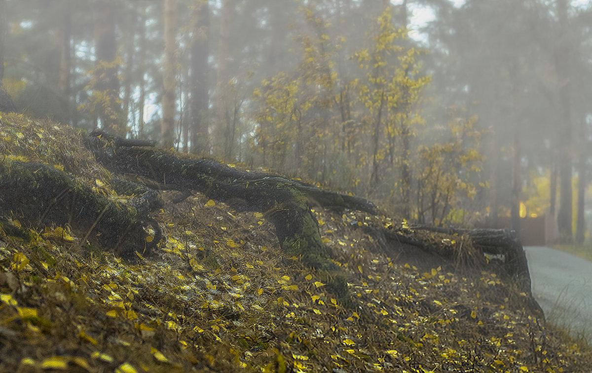 из тумана - Елена Лагода