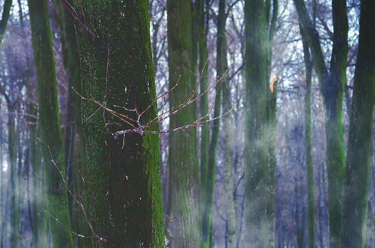 Таинственный лес. - Виктория Попова