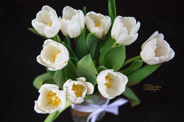 белые тюльпаны - Наталья Повстина
