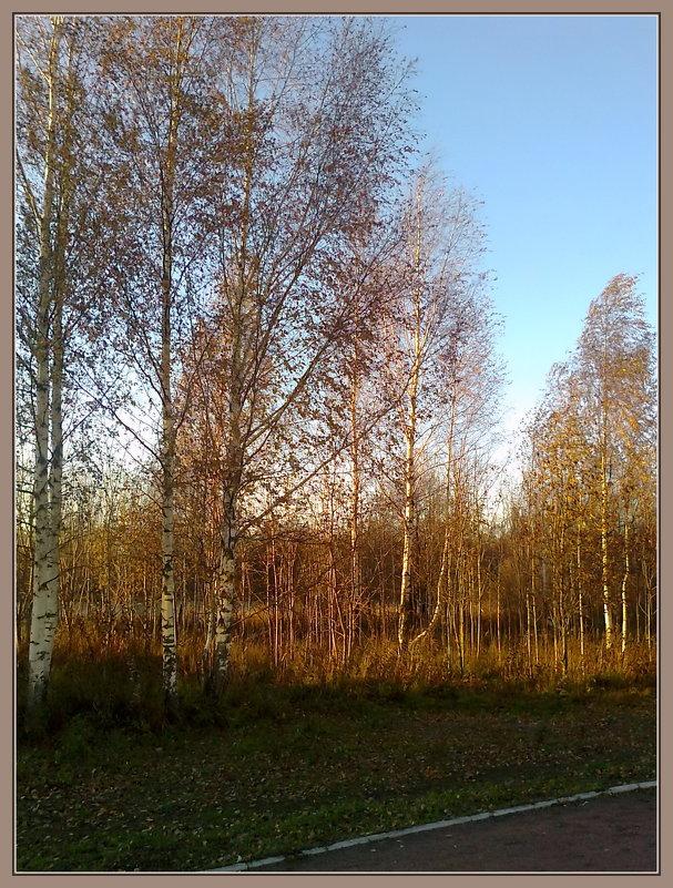 Поздняя осень - Лидия Симова