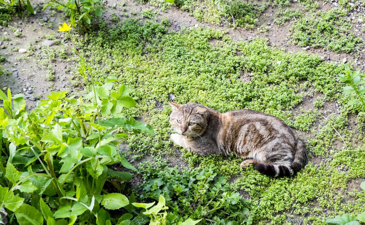 Весенний кот - Александр Деревяшкин
