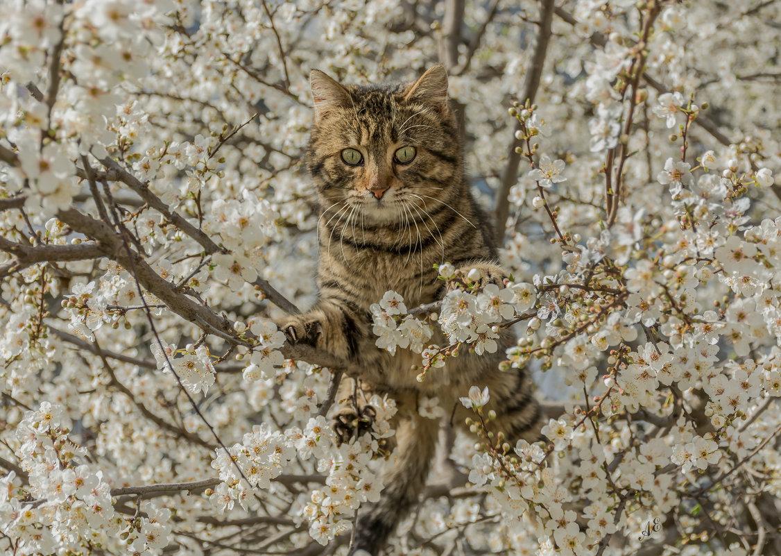 Весеннее настроение или мартовский кот - Александр Пушкарёв