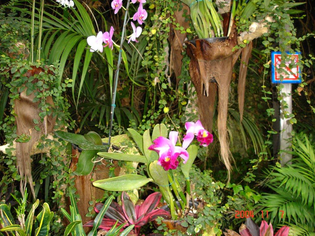 Уголок орхидей в Лоро-парке. - Владимир Смольников