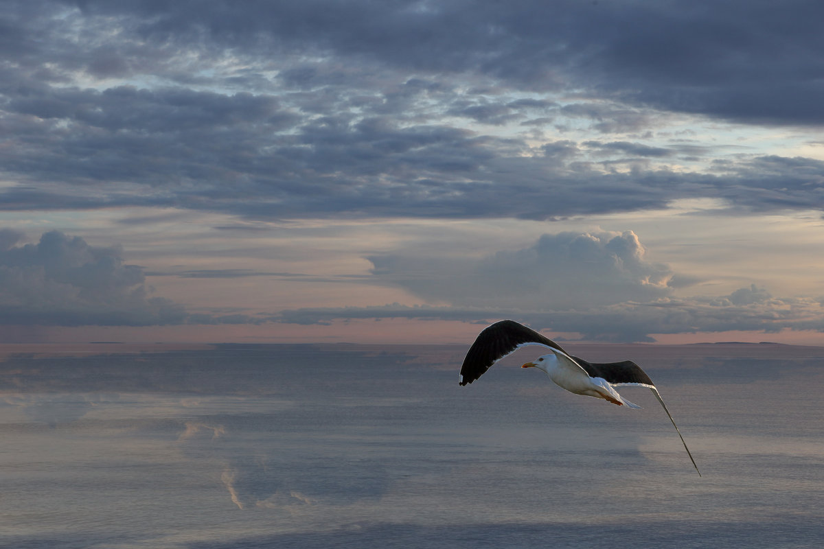 Белое море - Сергей Яснов