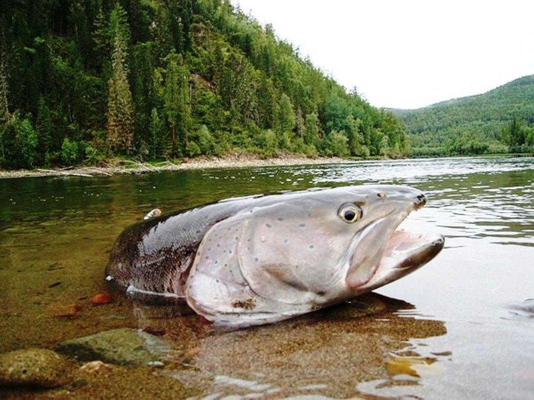 Автор: река чусовая, свердловская область, средний урал - вадим балакин