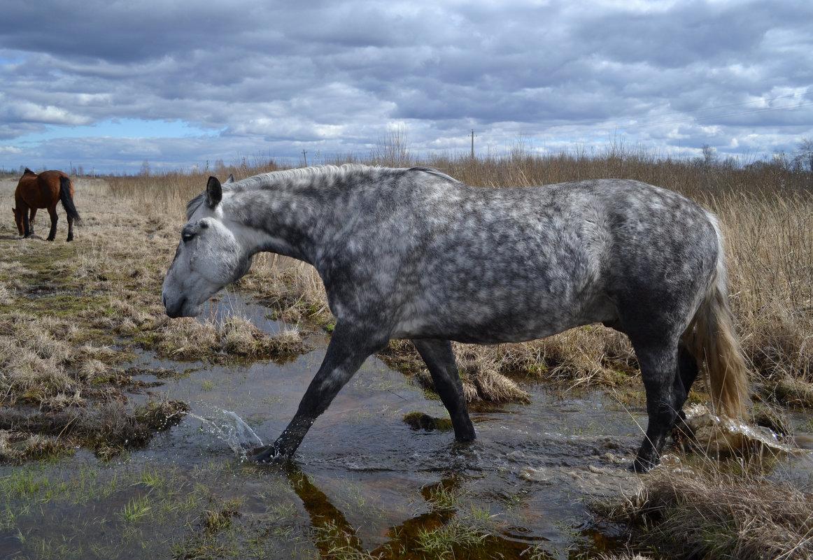 Серый конь шагает по воде. - Елена Глебова