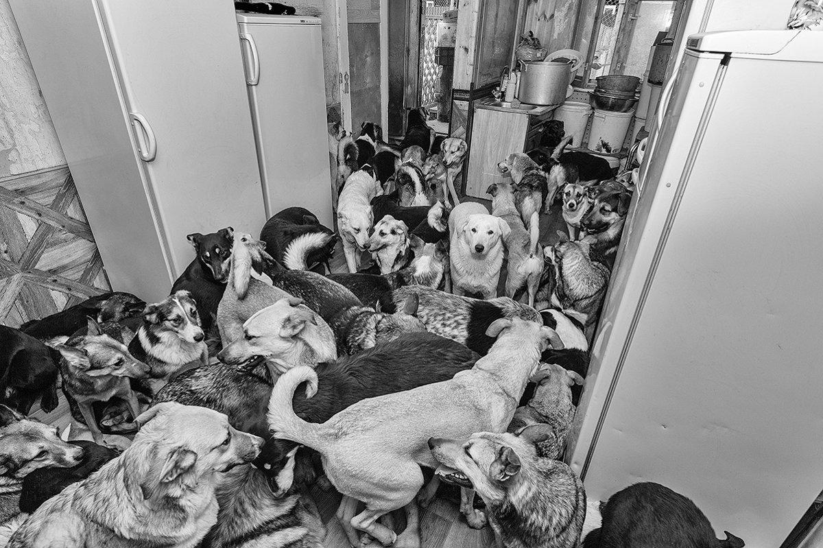 Приют для бездомных домашних животных - Анатолий Тимофеев