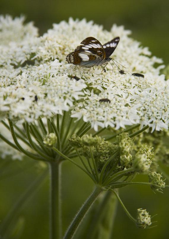 Бабочка на цветке - Ольга Гурьянова