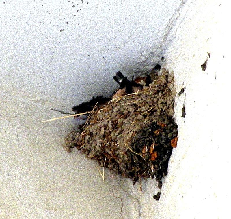 Гнездо - Герович Лилия