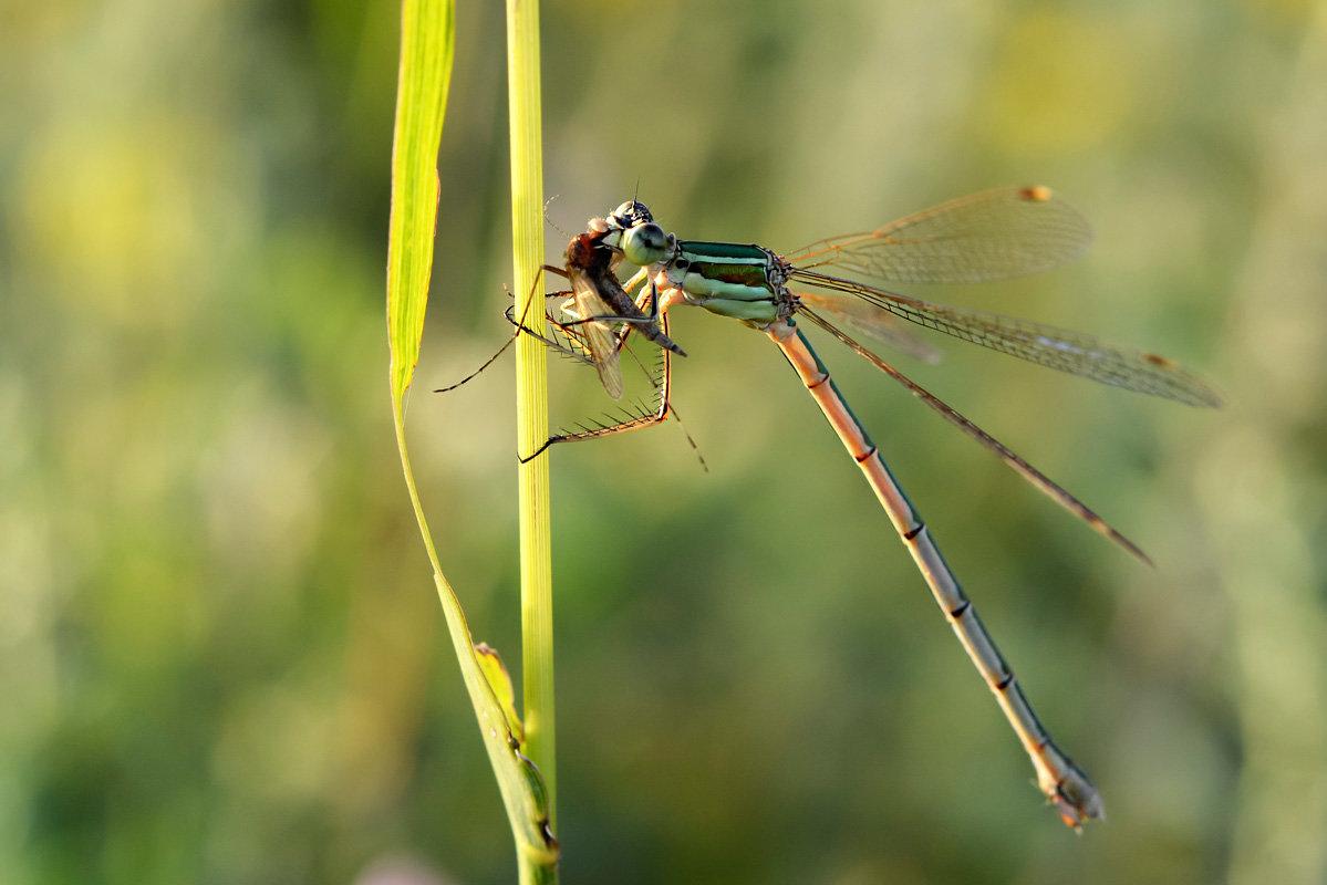ловит мух на лету