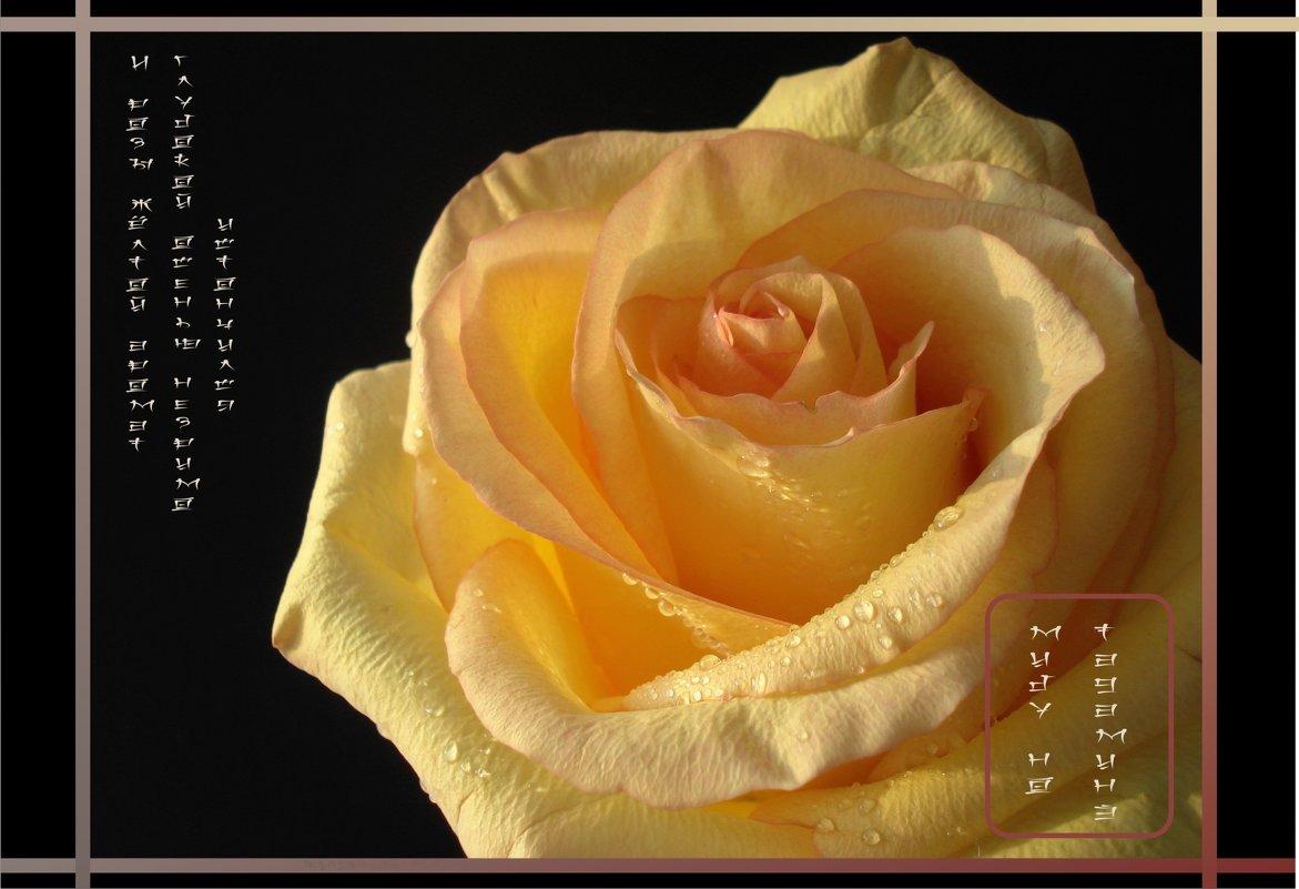 И розы жёлтой аромат глубокой осенью незримо истончился.. - Наталия Григорьева