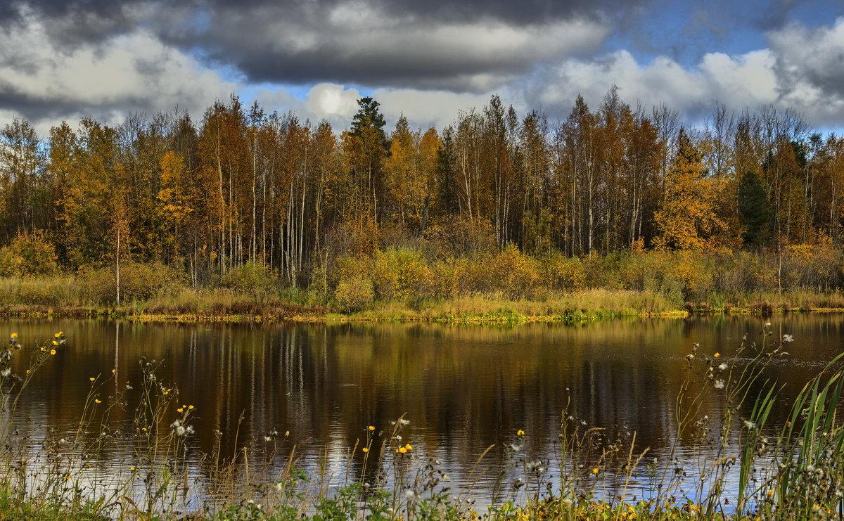 Золотая осень - mr. mulla