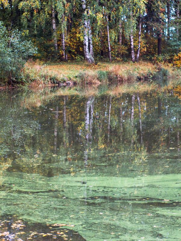 Осенние отражения - Виталий