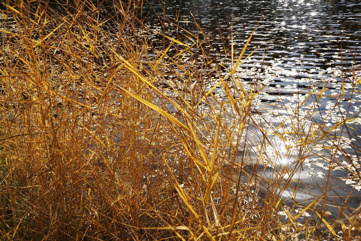 Солнце на воде - Наталия Григорьева