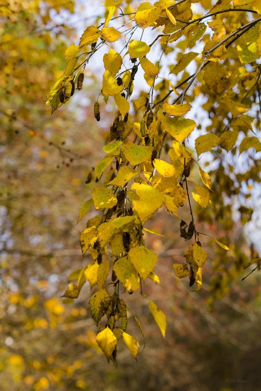 Осень золотая - Алексей Масалов