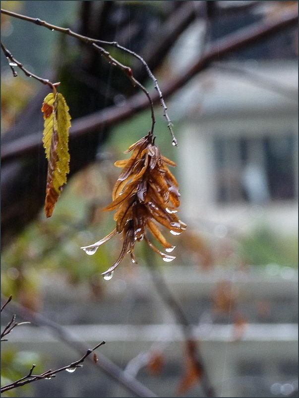 Осенний дождь... - Наталья Rosenwasser