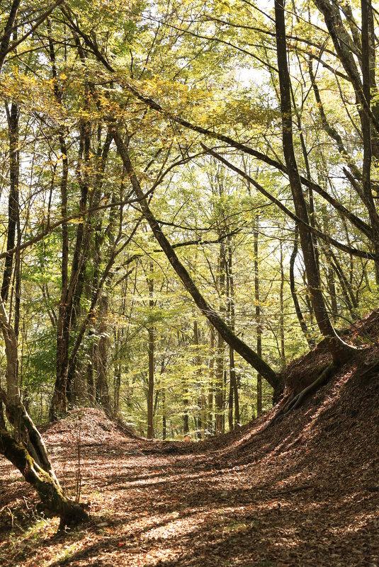 Осенний лес - valeriy khlopunov