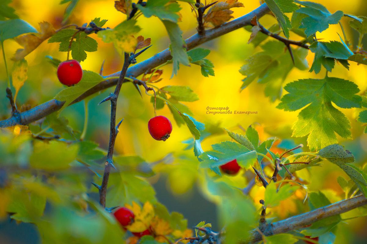 осень золотая - Екатерина
