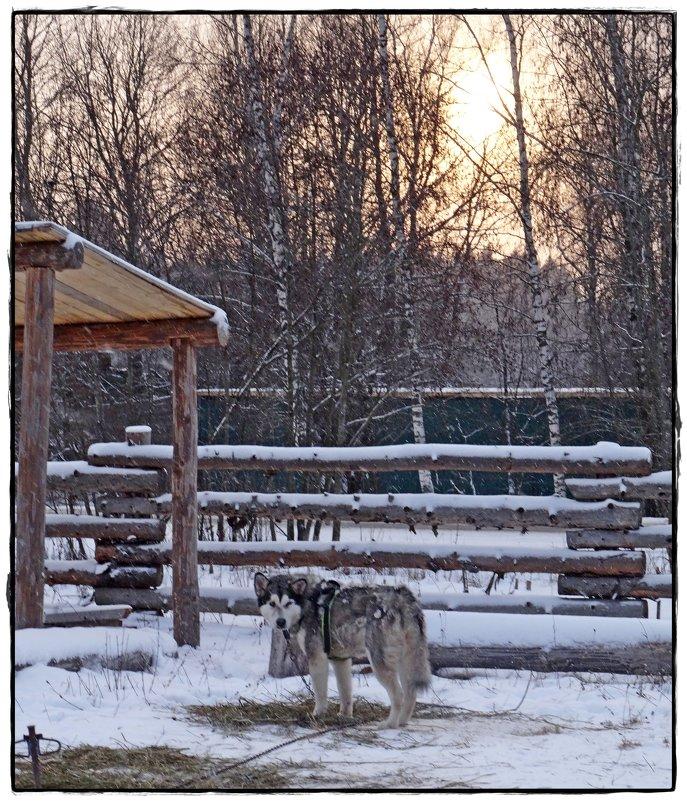 суровая зима спустилась с январём - Natalia Mihailova