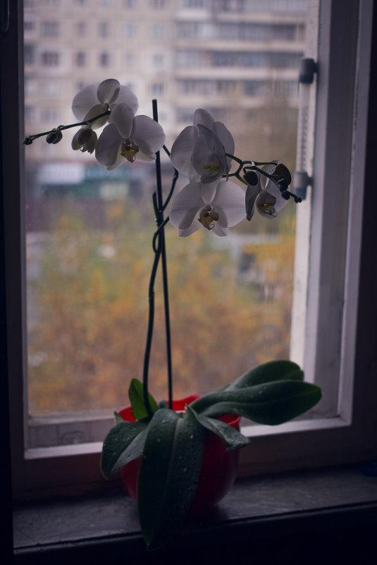 Орхидея - Есения Censored