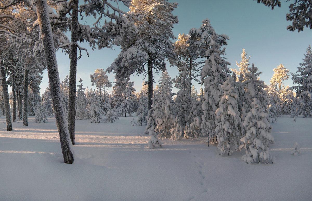 В заснеженном лесу светло и тихо... - Татьяна .