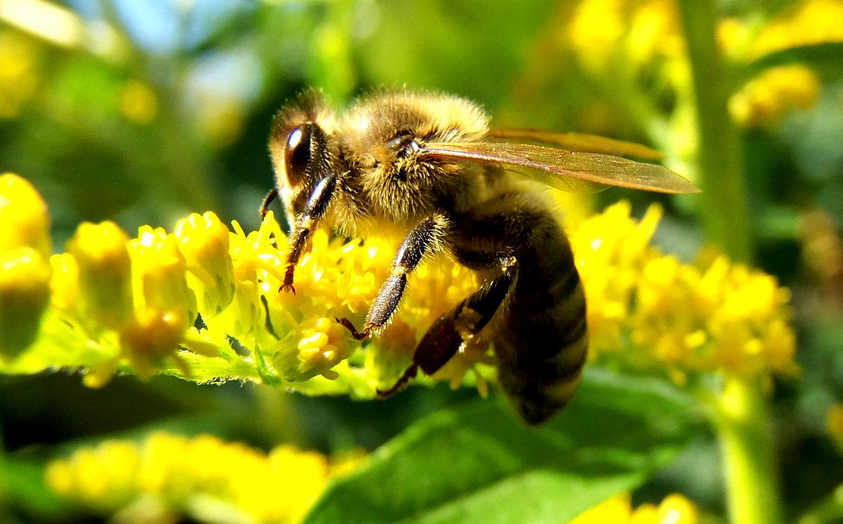 Пчелка. - Наталья