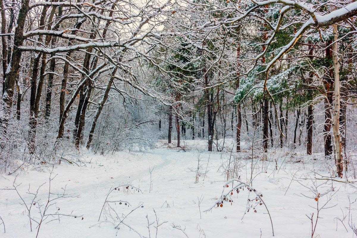 Природа зимой.. - Юрий Стародубцев