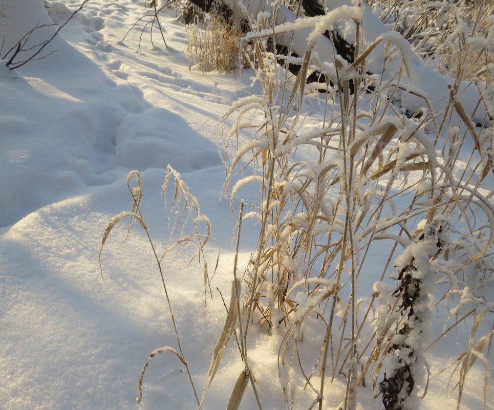 Зима - Вера Щукина