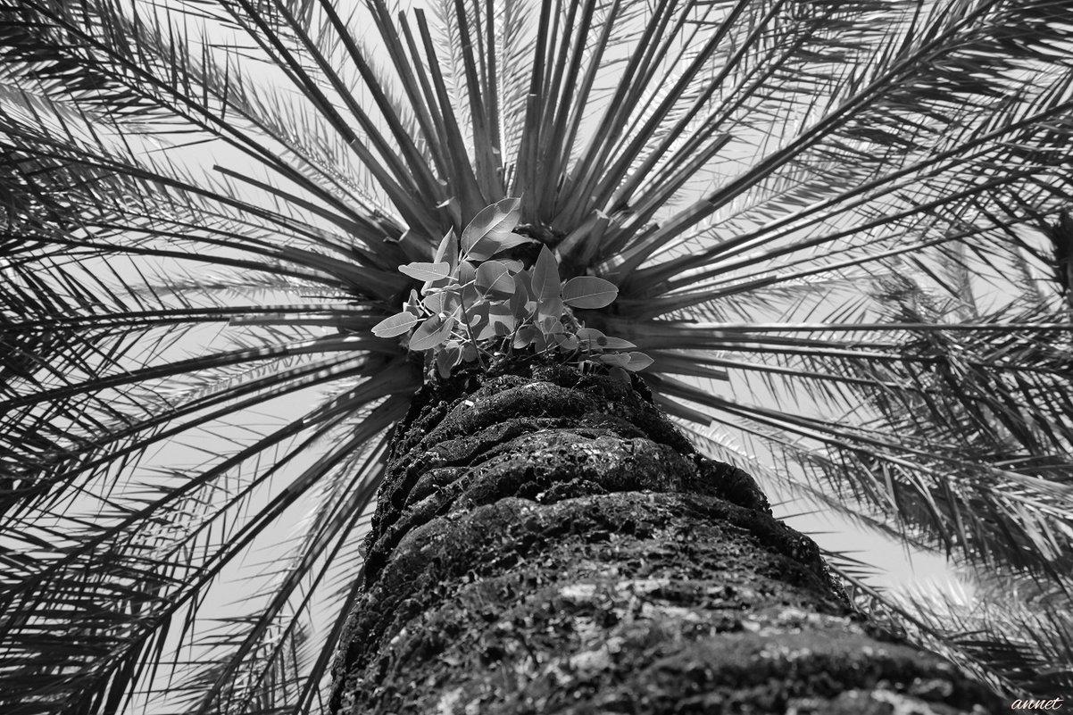 Пальмовое солнце - annet Sagitova