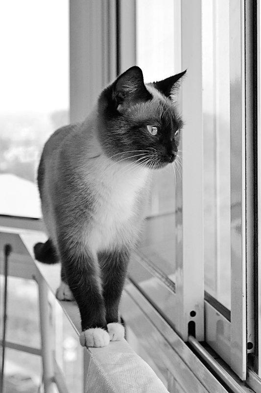 Кошка - Светлана Мещан