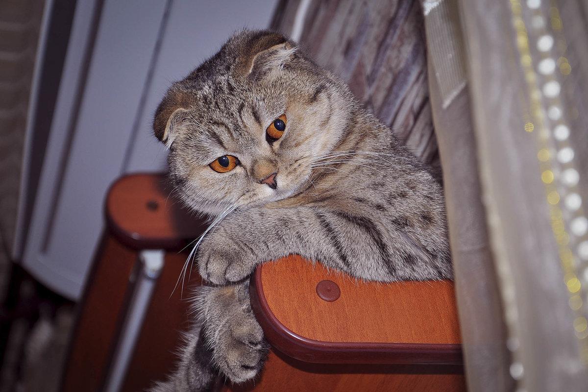 кошка вислоушка - Валерия Бунак