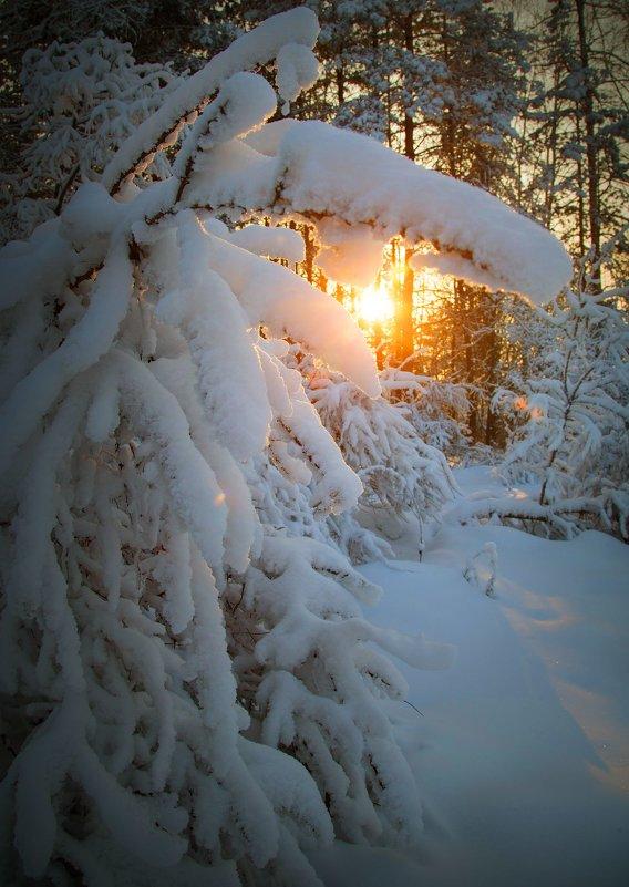 Сибирские закаты - Павел Сухоребриков