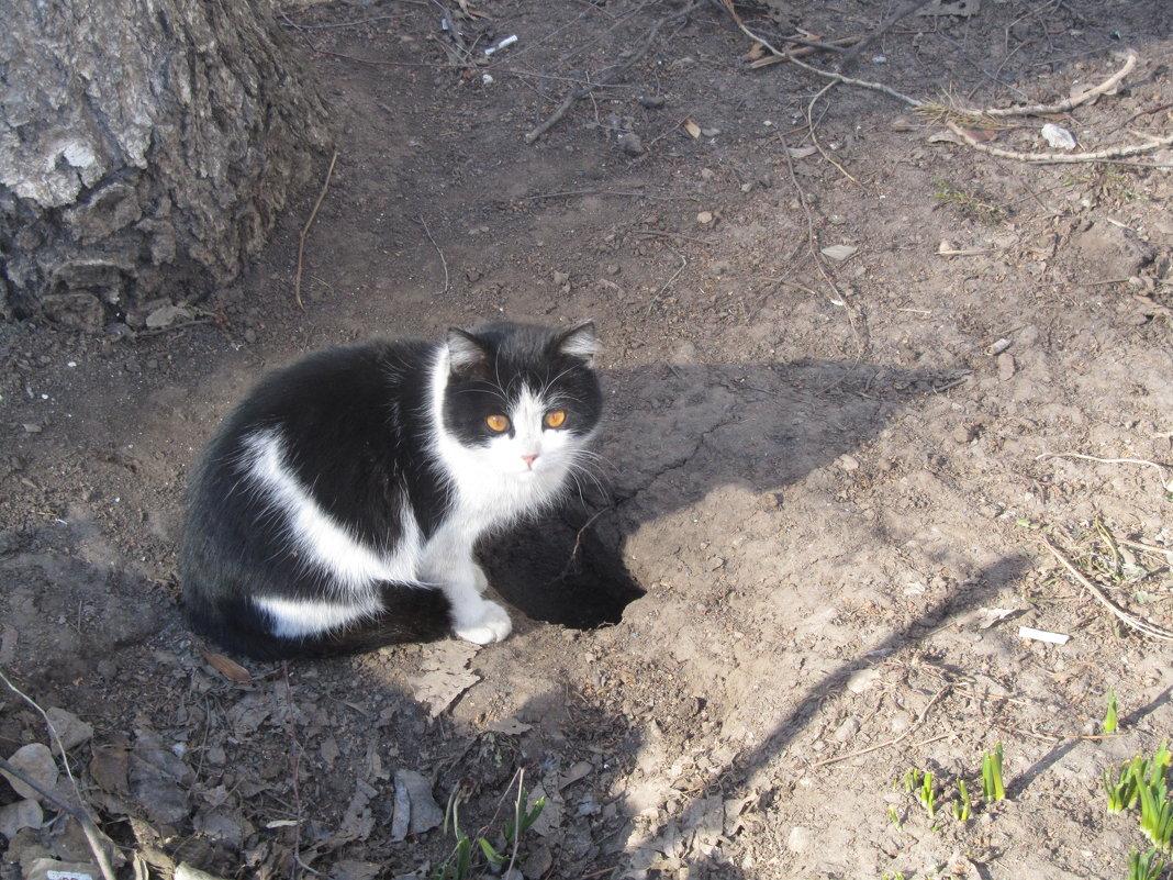 просто кошка - tgtyjdrf