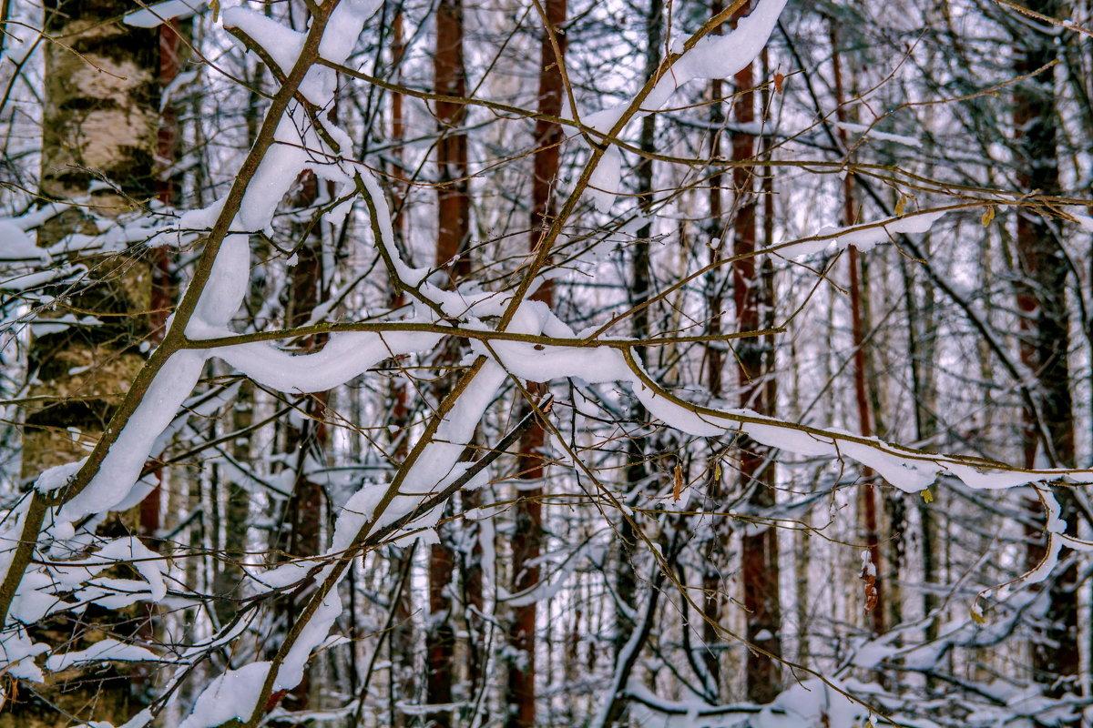 Зима в лесу. - Анатолий. Chesnavik.