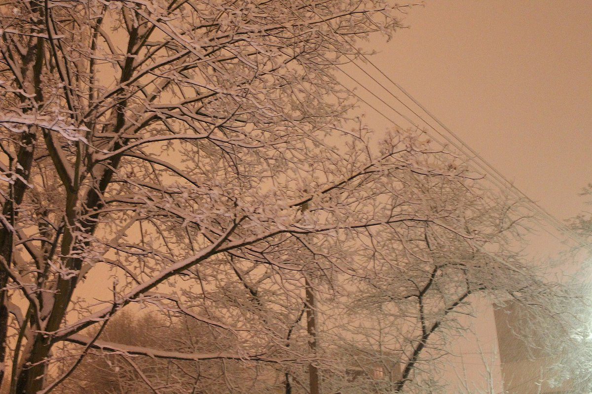 Заснеженное дерево - Лина Свиридова