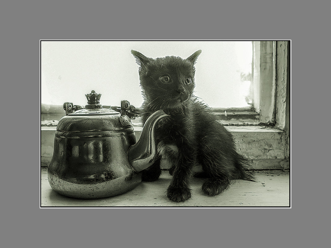 А молоко в чайник налить можно? - Сергей Черных