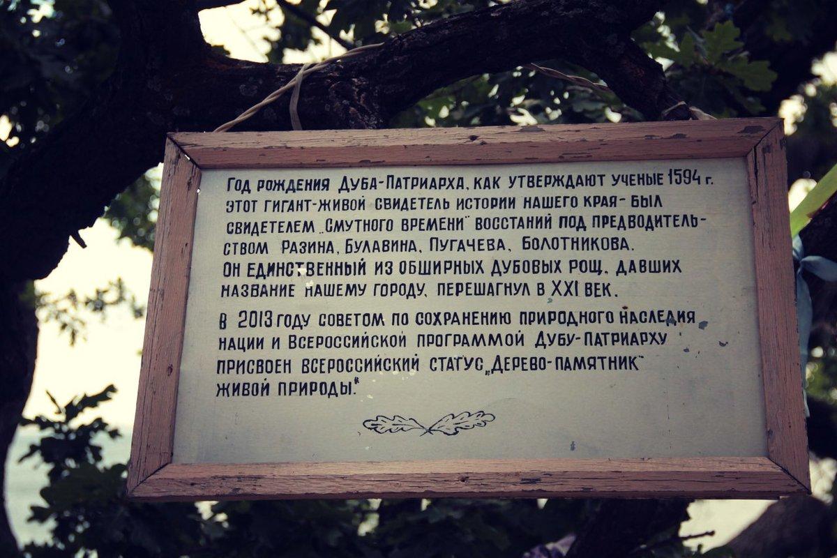 О дереве памятнике в г.Дубовка - Ольга Чирятникова