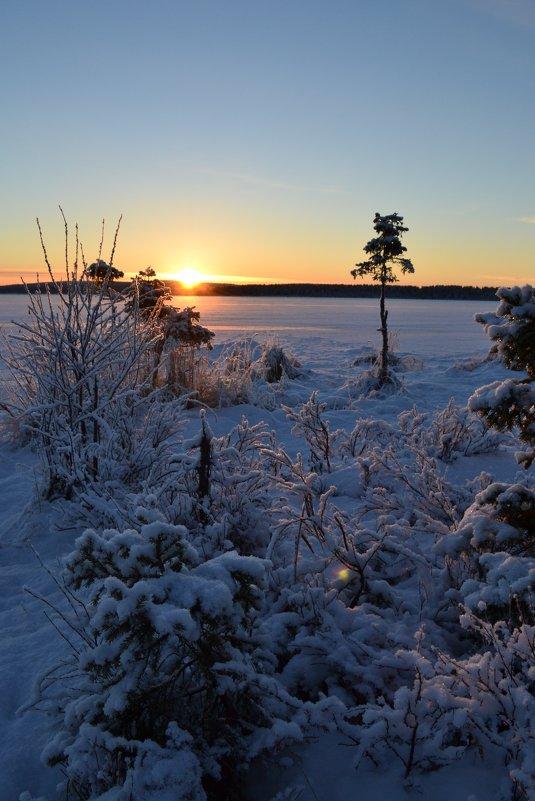 Краски зимнего вечера - Ольга