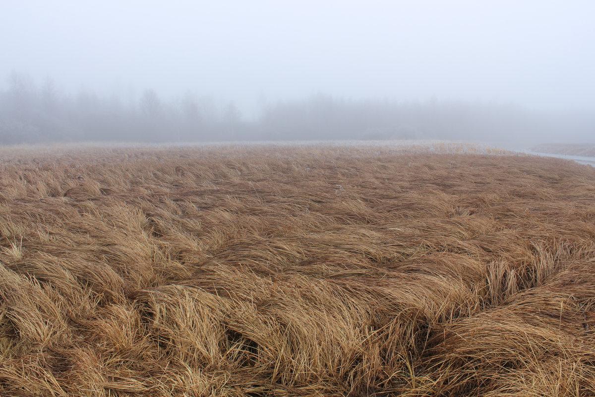 Сухая трава. - Герман